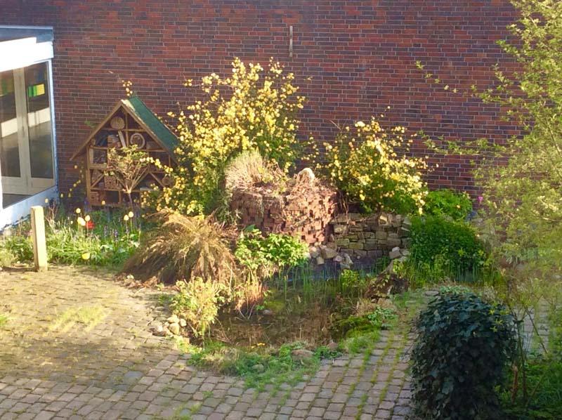Die GEOase ist ein Biotop inmitten der Schule.